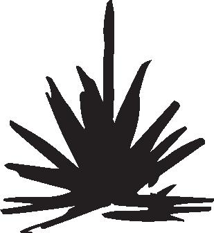 blackpinecone